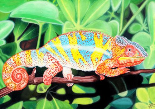Panther Chameleon by AlienOffspring