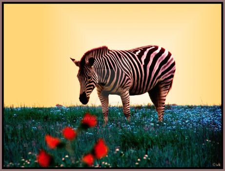 whimsically striped by wkrige