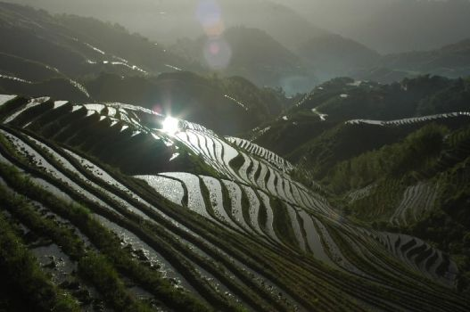 Sunrise on the rice field by coosy