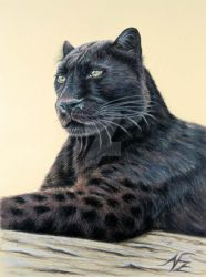 Panther Jaguar by ArtsandDogs