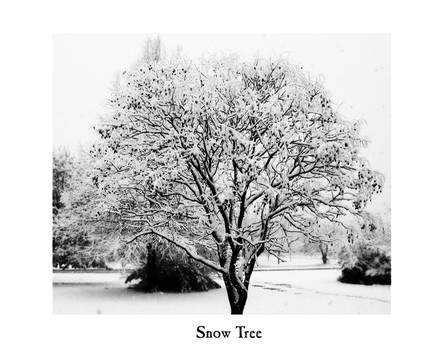 Snow Tree - black and white by FreneticAmnesic