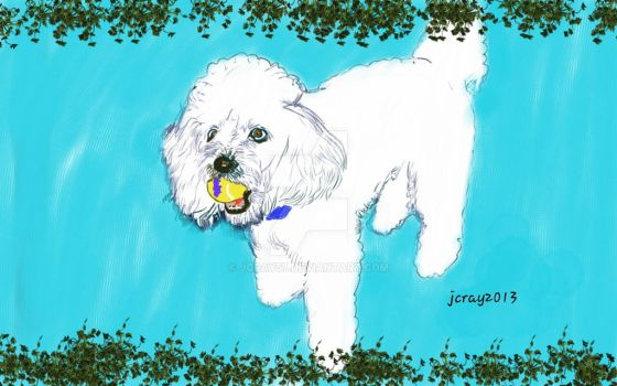Baxter the poodle by jcray57