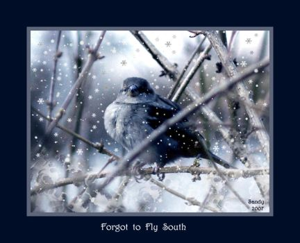 Forgot to Fly South by sandpiperw