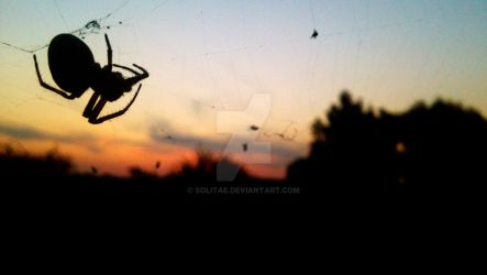 Spider by Solitae