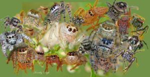Spiders I Have Loved by DorothyPugh