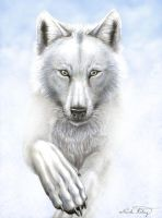 From the Clouds: WOLF PRESERV. by TheGuardianDragon