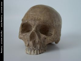 freaksmg-stock - new skull 11 by freaksmg-stock