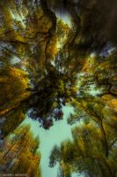 Zooming Into Autumn I by Tigles1Artistry
