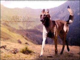 Arno by FamousShamus109