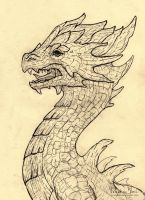 Another dragon head... by Nimphradora