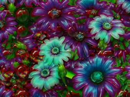 Daisies and Cherries by Lasercrew420