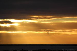 Sunset Gulls by N-ScapePhotography
