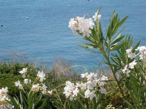 Flowers by the Sea by SofiaHaase