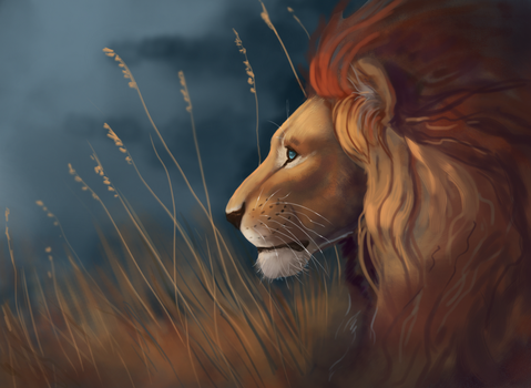 Lion Sketch by Noctualis