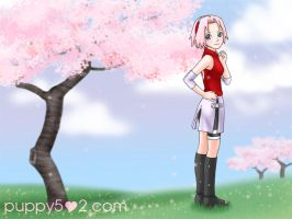 Sakura from Naruto - BG by chun52