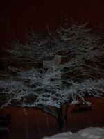 Snow Covering Tree by RavenRechior