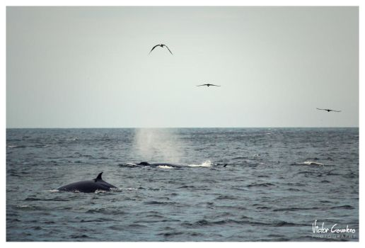 Sail with whales by byCavalera
