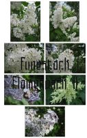 Fune-stock_flowerpack2 by Fune-Stock