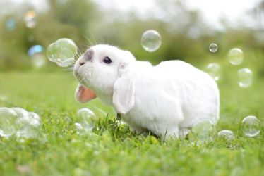 bunny and bubbes by Exempeel