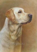 Labrador drawings by Drawing-Portraits
