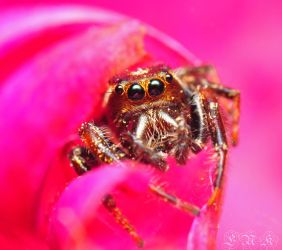 Jumper on Pink by Enkphoto