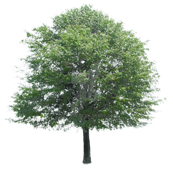 Another+Tree by Alwa3d