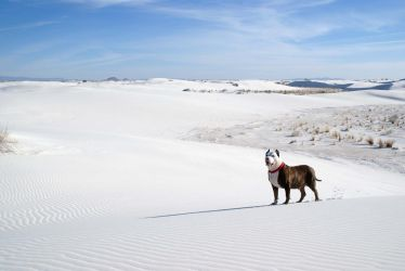 Dexter and the white sands by Art-by-Jilani