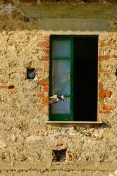 Window of Opportunity by rmh7069
