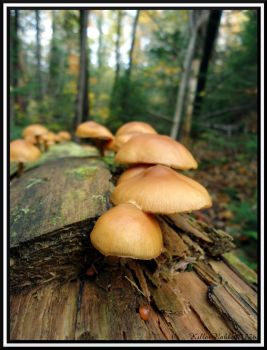 A Land of Mushrooms I by KillerRabbit04776