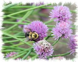Bee Chive by Shadowhawk9973