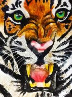 Tiger by cookiemonster1597