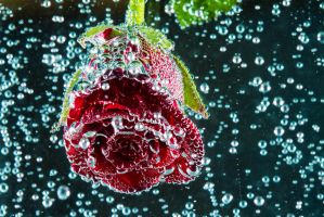 Blooming Bubbles by espimages