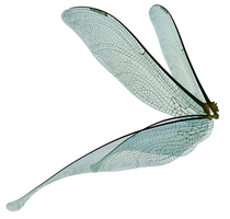UNRESTRICTED - Dragonfly Fairy Wings Render by frozenstocks