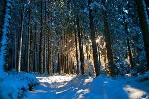 January Forest by Justine1985