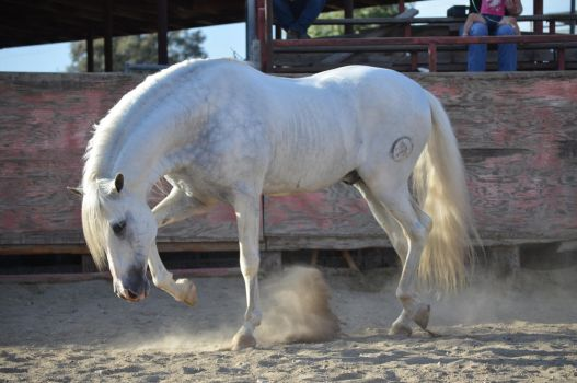 DWP FREE HORSE STOCK 246 by DancesWithPonies