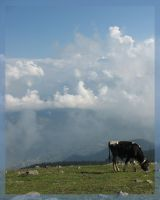 moo above the clouds by aspirin111