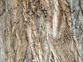 Texture arbre by Made-in-Popsiinette