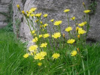 Stock: Yellow Flowers by legendpendragon9
