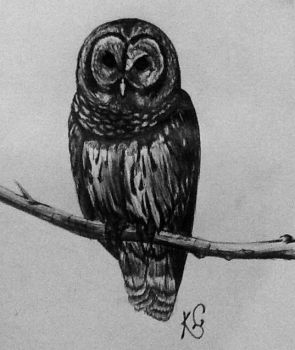 owl by WolfOfHorror