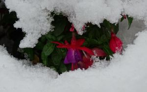 Blooming in a snowcave by UdoChristmann