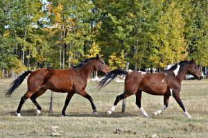Trotting Horses by EquineGhost