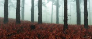 Autumn Fog by 3DLandscapeArtist