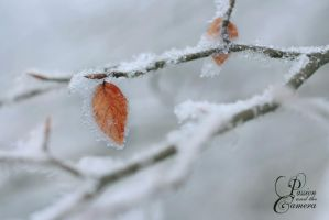 Winter's Cold Embrace by PassionAndTheCamera