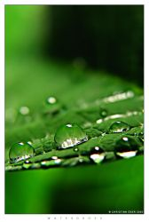 Waterdrops by Nightline