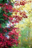 Tree Of Red . . . by Momofbjl