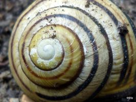 snail shell by Lionpelt-66