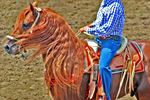 Riding A Red Horse by xxtgxx
