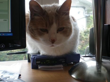 Catloaf on my internets by vonIndy