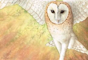 Barn Owl by WaryCassowary