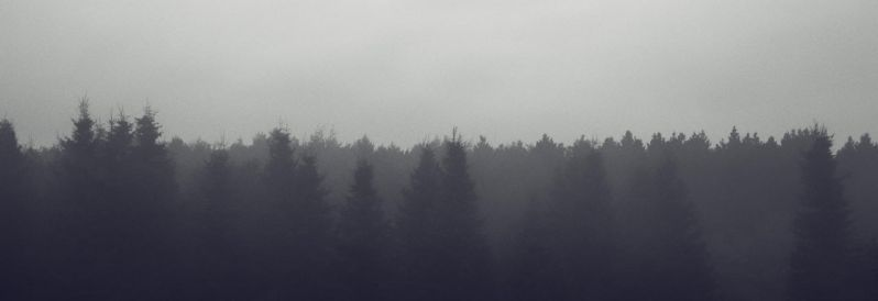 fog in the forest by stupidduck